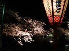 sakuramatsuri_q